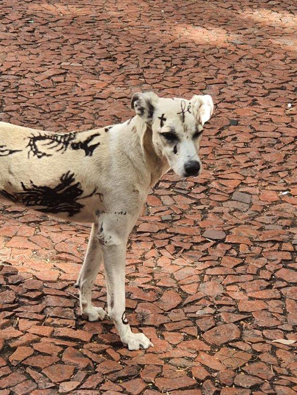 Cachorro estava na praça da AlfândegaArquivo Pessoal / Arquivo Pessoal